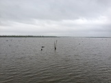 A nearby bayou with dead cypress trees from the salt water that came in from Katrina
