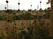 Fields beyond la Casita del Barro.