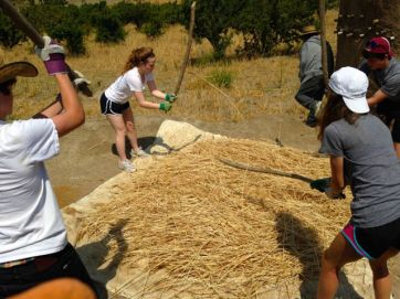 Trashing the wheat