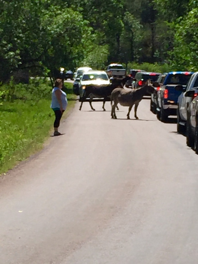 The burros in the road. People love to feed them carrots.