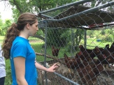 Kalyna with the chickens